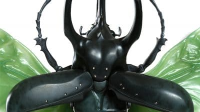 jade atlas beetle
